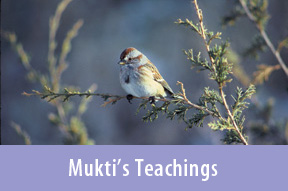 Sparrow in a tree, Mukti's Teachings